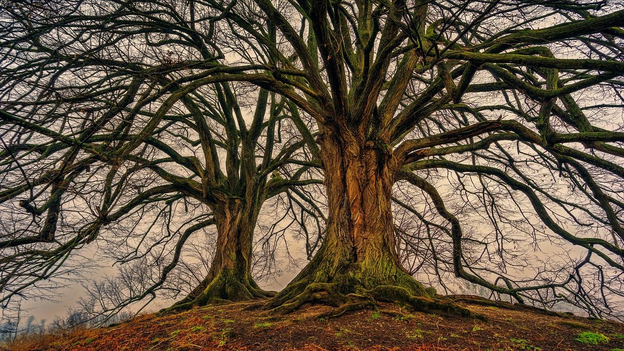 tree-3097419_1280